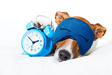 dog sleeping with clock