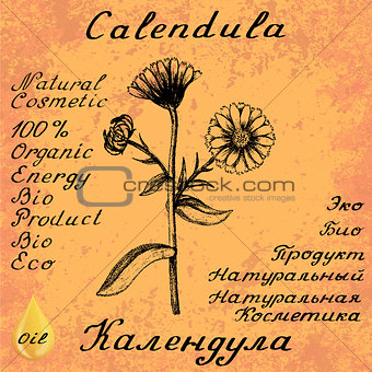 Calendula hand drawn sketch botanical illustration