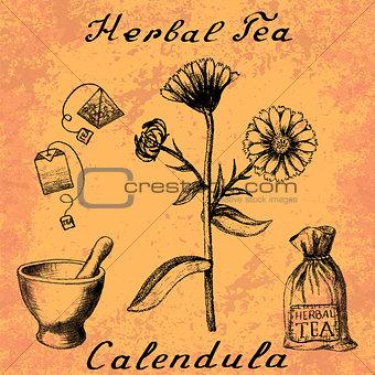 Calendula hand drawn sketch botanical illustration