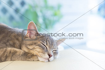 sleeping cat on Studio chair