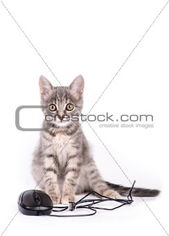 beautiful small kitten plays with the computer mouse