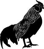 Cock. Poultry rooster. Farmer bird cock. Bird cock. Rooster black silhouette vector isolated on white background.
