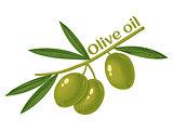 green olives for oil