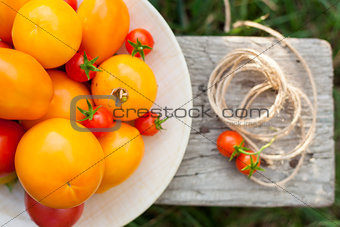 tomatoes on plate in a garden