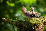 Jay bird feeding baby Jay