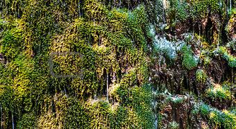 green water grass wallpaper
