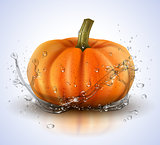 Pumpkin isolated on white with splashes of water. Realistic vector illustration.