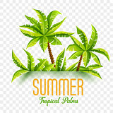 Summer coconut palms vector illustration jungle forest tropical