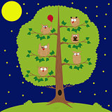 owl sitting at night on the tree, funny owls