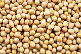 Soybeans Close Up