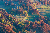 Colorful trees on slope in autumn Carpathian.