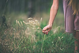 Girl's hand with dry grass