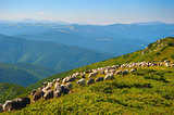 Sheep's pasture in the mountains