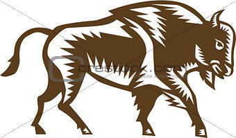 American Bison Woodcut