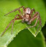 Hairy spider on green leaf