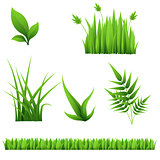 different grass and leaves isolated on white background
