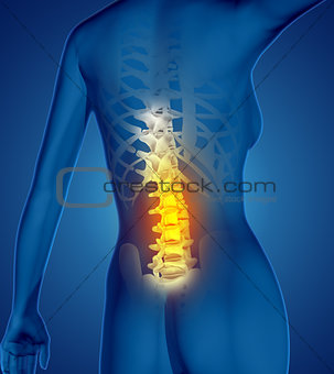 3D female medical figure with spine highlighted