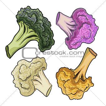 Cauliflower hand drawn vector illustration.