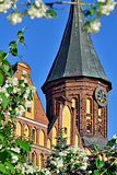 Tower Konigsberg Cathedral and Jasmine. Symbol of Kaliningrad, f