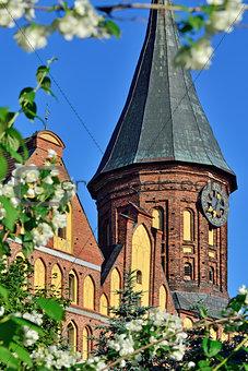 Tower Konigsberg Cathedral and Jasmine. Symbol of Kaliningrad, f