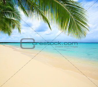 Caribbean sea and palm leaves.