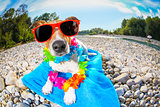 summer beach dog