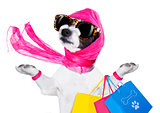 shopping diva dog