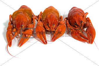 three Boiled crayfish on isolate white background