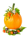 Thanksgiving day composition of pumpkin with fruit flower and  green leaf.