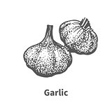 Vector illustration hand-drawn garlic