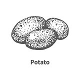 Vector illustration hand-drawn potato