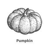 Vector illustration hand-drawn pumpkin
