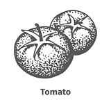 Vector illustration hand-drawn tomato