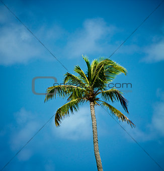 Alone Palm Tree