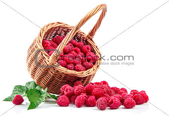 Fresh berries raspberry in wicker basket strewed