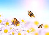 Butterflies flying over flowers