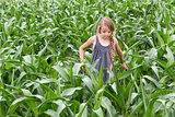 Farmer girl inspecting the growing corn