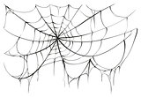 Torn spider web on white background