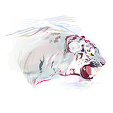 White Tiger, Watercolor Illustration