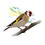 Goldfinch Bird, Vector Illustration