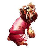 Glamorous Pocket Dog