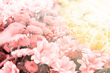 Amazing floral background with sun rays