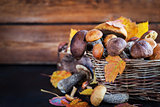 Wild forest edible mushrooms (boletus) in basket