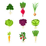 Fresh Vegetables With Roots Primitive Illustrations Set