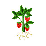 Fresh Strawberry Primitive Realistic Illustration