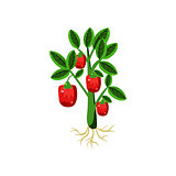 Fresh Sweet Pepper Primitive Realistic Illustration