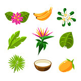 Tropical Exotic Fruits And Flora Set Of Icons