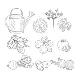Farm Product Clipart Elements Hand Drawn Realistic Sketch