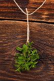Mentha herb.