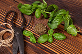 Basil, Aromatic culinary herbs.